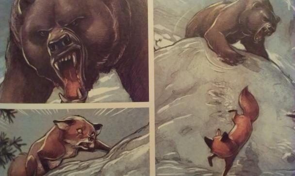 love-zorro-atacado-por-oso