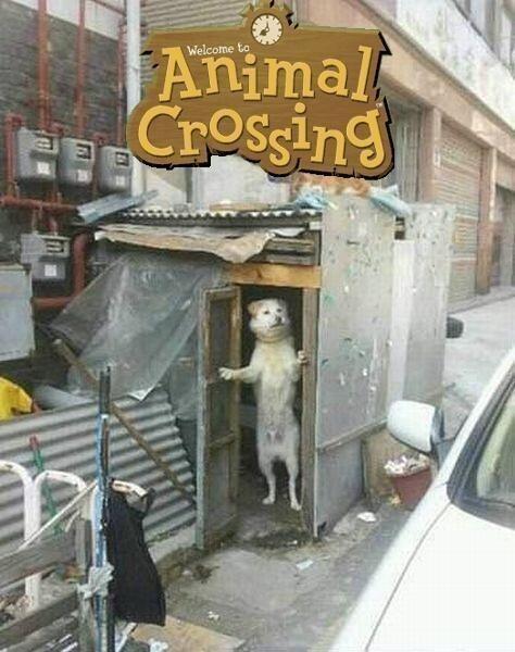 animal-crossing-perro-abriendo-la-puerta