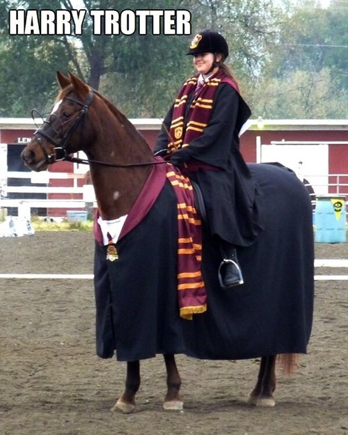 harry-trotter