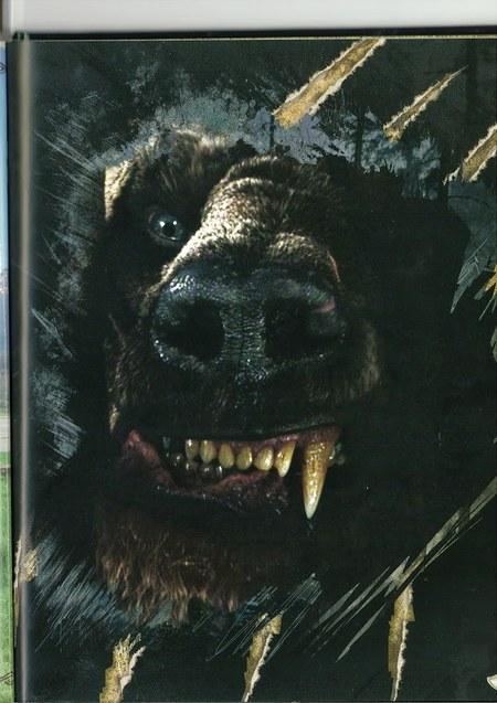Imagen Beorn oso negro