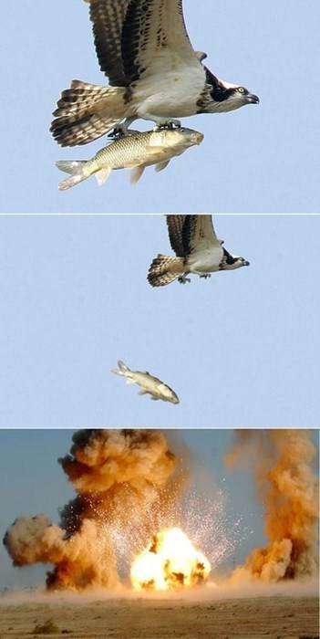 halcón-bombardero