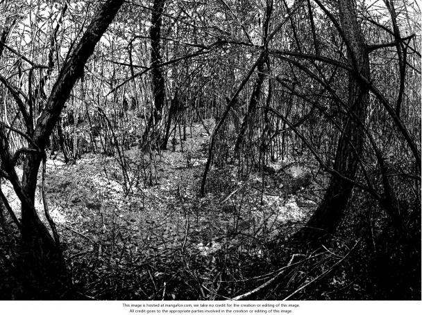 Viñeta que ilustra los bosques al pie del Fujiyama. Parece una foto, ¿verdad? Obsérvese lo terrorífico que puede resultar el juego del ramaje de los árboles