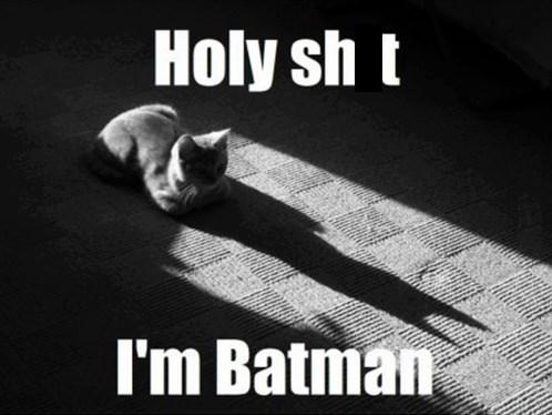 la-sombra-de-un-gato-parece-batman