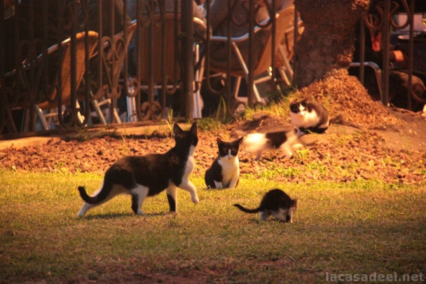 gatos-de-sitges