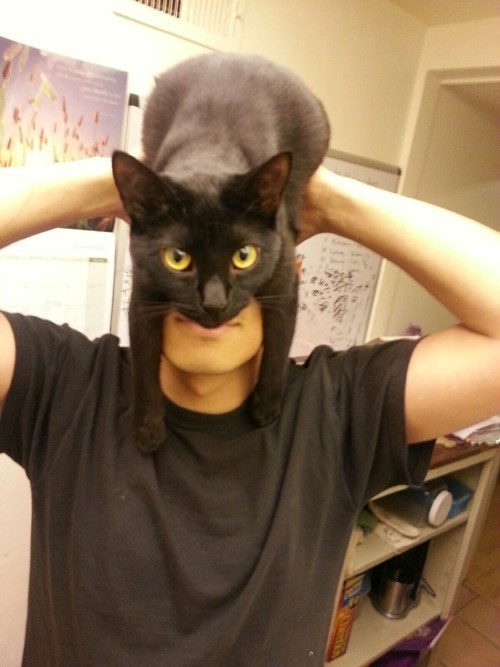 antifaz-de-batman-con-un-gato