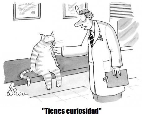 medico-le-dice-a-un-gato-que-tiene-curiosidad