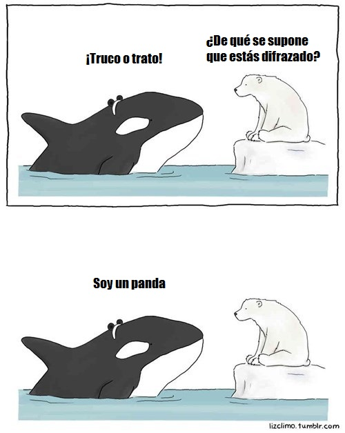 orca-se-disfraza-de-panda-para-halloween