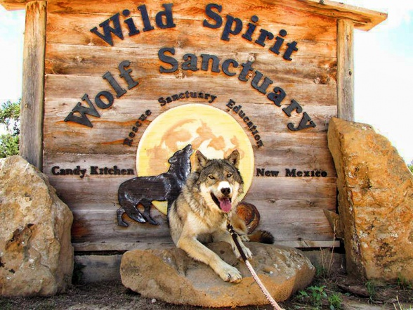 wolf spirit wolf sanctuary