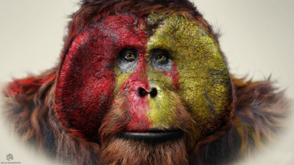 dawn_planet_of_apes4