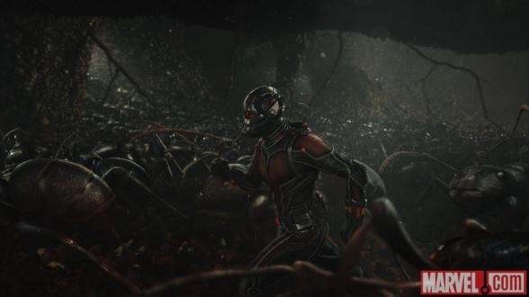 Ant Man 06