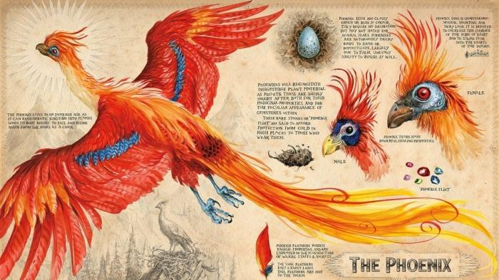 Harry Potter y la cámara secreta ilustrado fénix