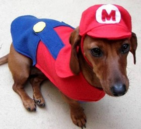 1 mario dog costume 280x256 copia