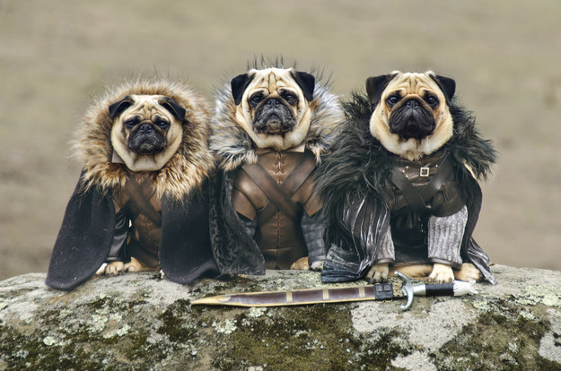 18 pets who are slaying at cosplay5 copia