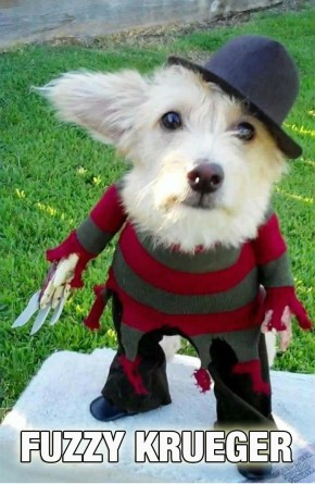 awesomehalloweendogcostume 81946 0 290x445 copia
