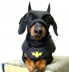 best batman dog costume 281x295 copia