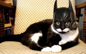 i am batman cat 313