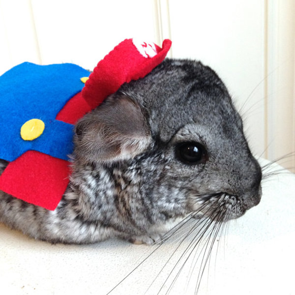 superhero pet cosplay 02