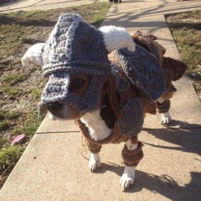 the elder scrolls v skyrim inspired dog costume 1