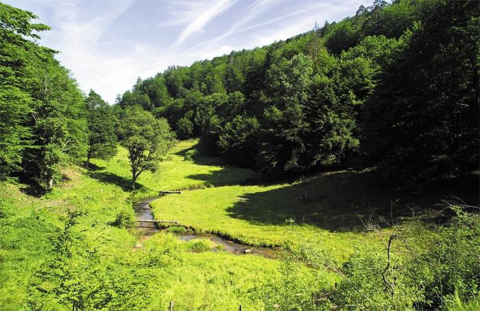 bosque-del-spessart