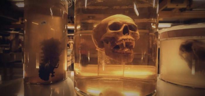 Cráneo de Drácula