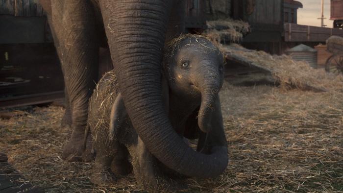 Dumbo (4)