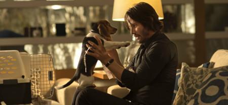 John y el perro