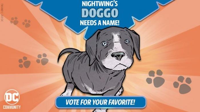 nightwing puppy vote